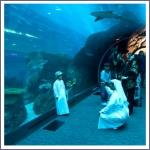 Стеклянный туннель аквариума в Дубае
