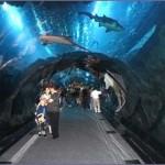 aquarium Dubai 2 150x150 Стеклянный туннель аквариума в Дубае