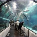 aquarium Dubai 3 150x150 Стеклянный туннель аквариума в Дубае