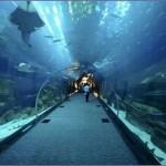 aquarium Dubai 4 150x150 Стеклянный туннель аквариума в Дубае