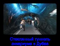 tunel 2 Пазлы